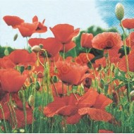 Field of Poppies Napkins - 20pk - 3ply