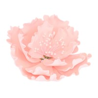 Pink Open Peony with stamens